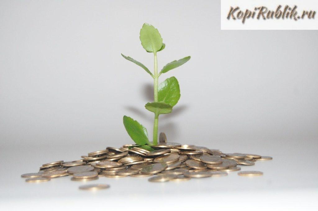 росток денежного дерева