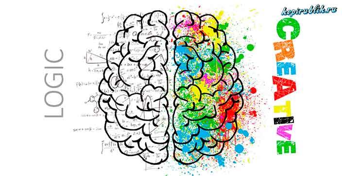 Мозг человека и два его разных полушария